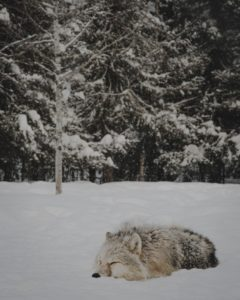 winter perfect nap
