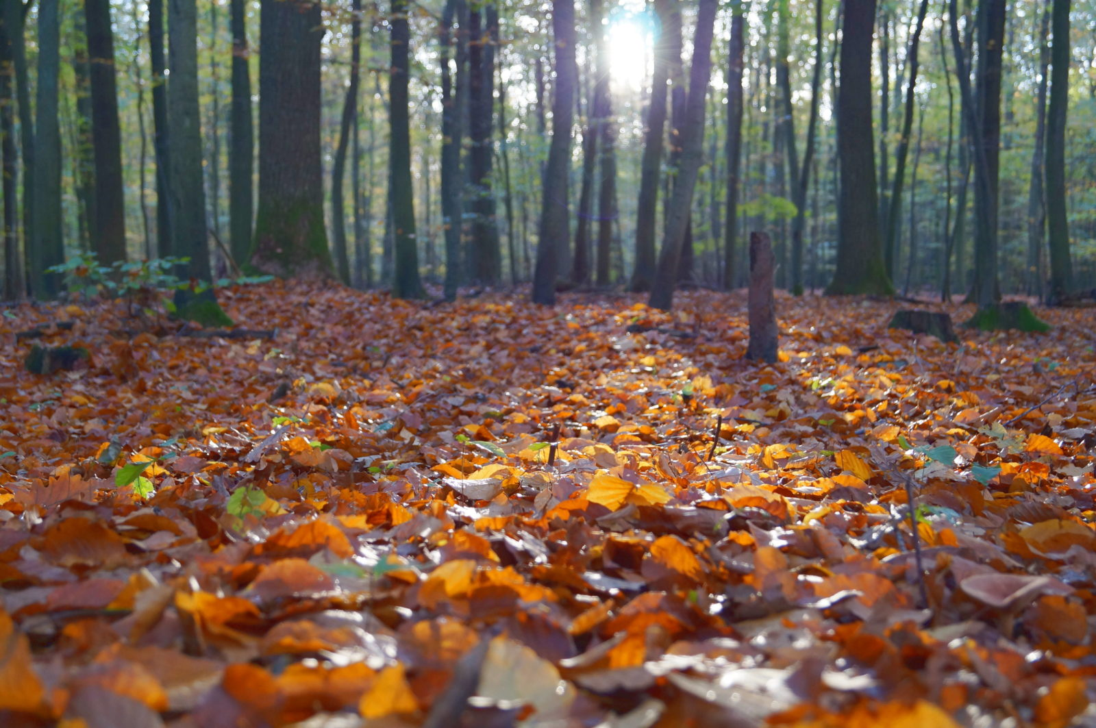 Fall Acupressure