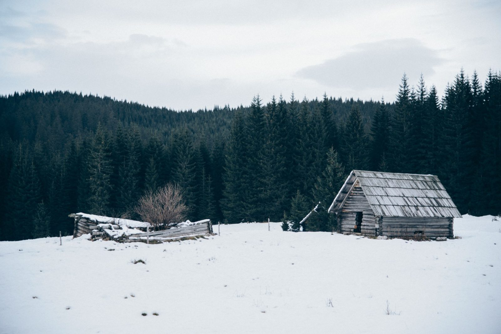 How to End SAD, Seasonal Affective Disorder, and Start Loving Winter
