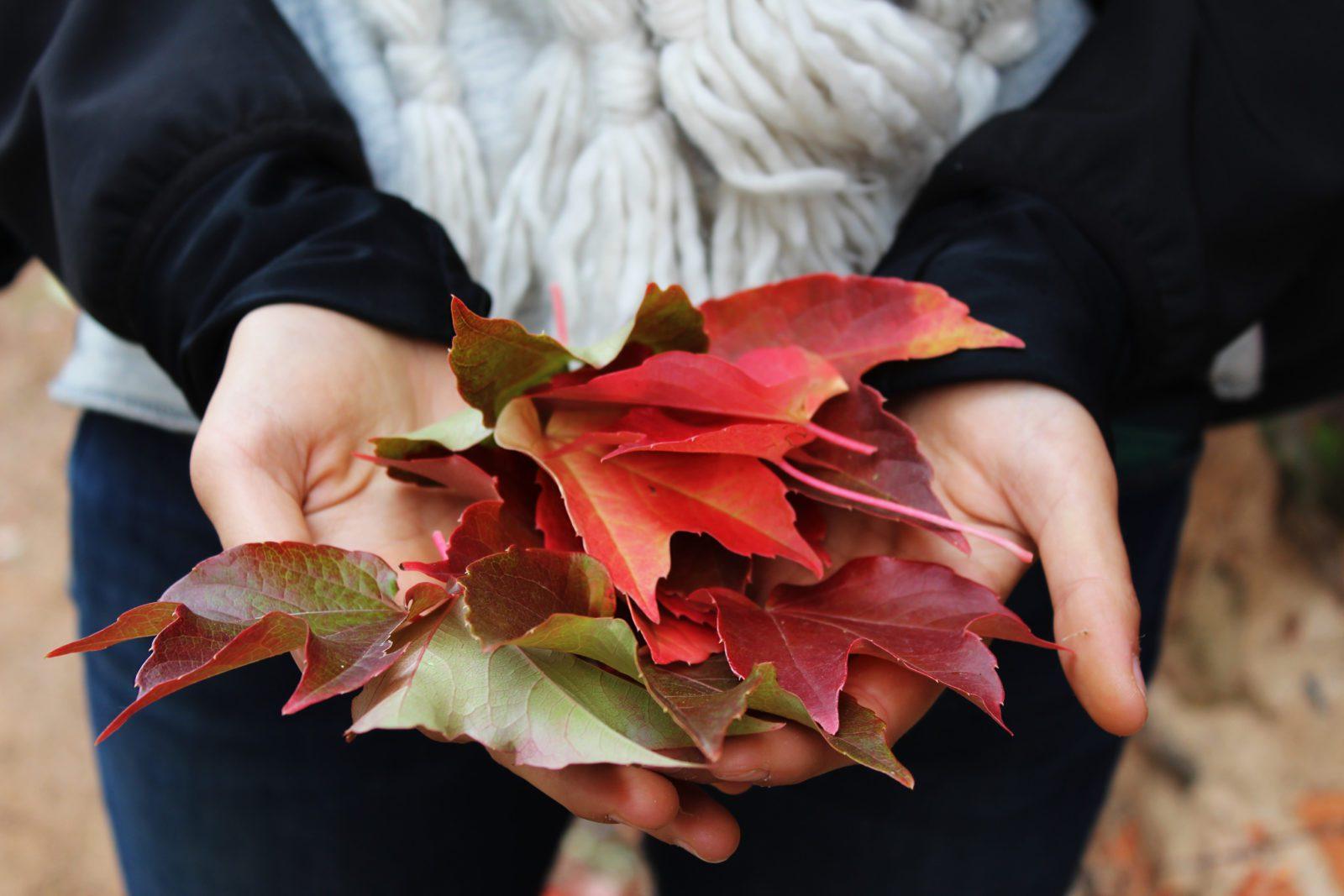 Fall Health Tips
