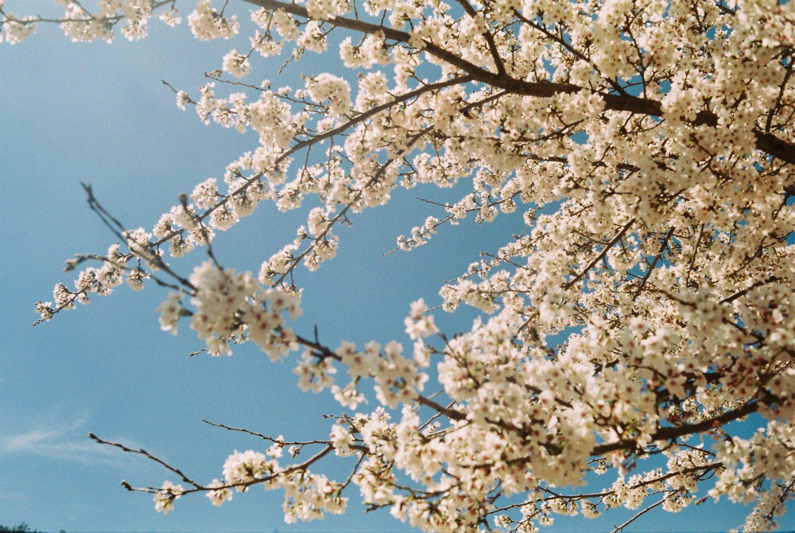 Spring into Spring: Natural Health Tips