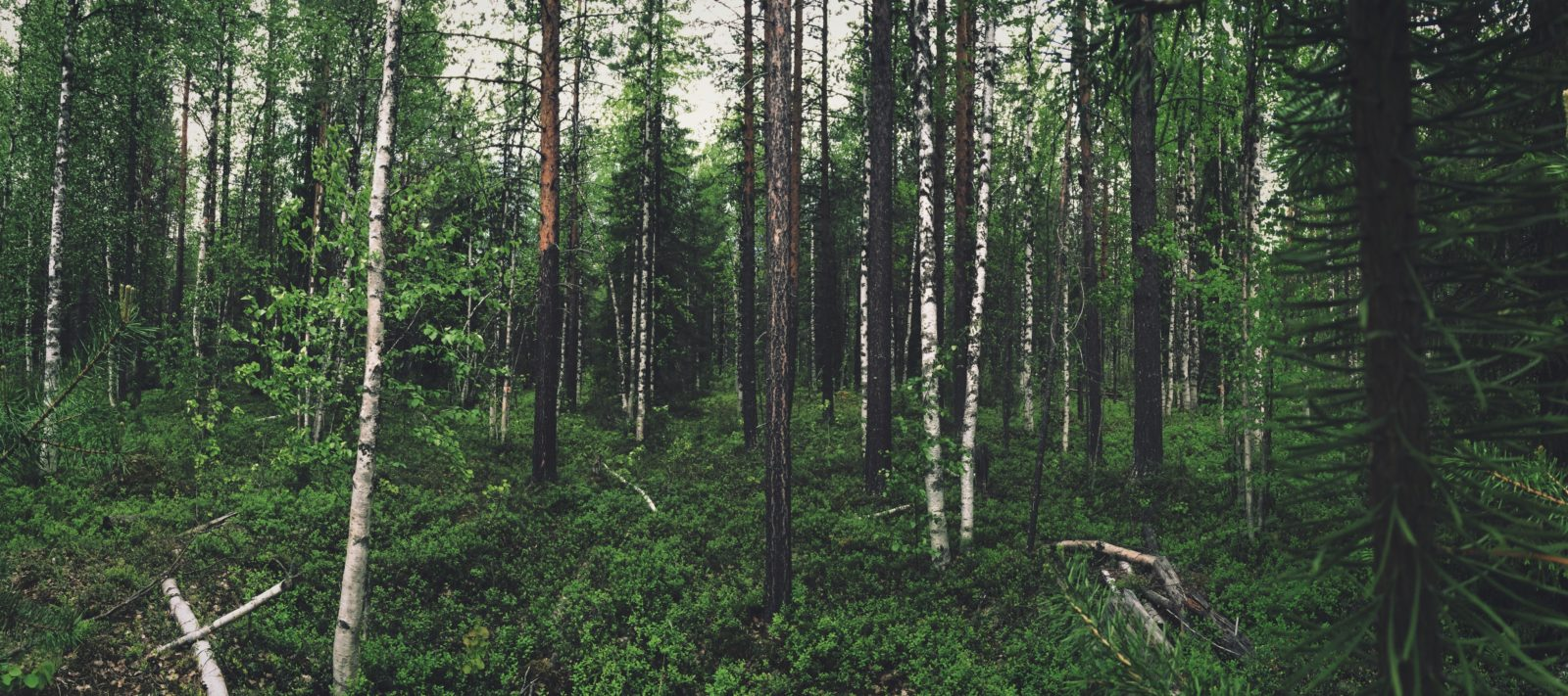 Forest Bathing and Chinese Medicine